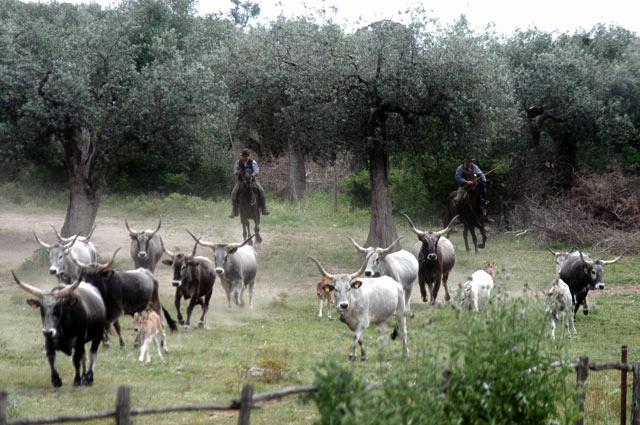Equinus lo spettacolo equestre con i veri butteri di maremma for Planimetrie tradizionali della fattoria